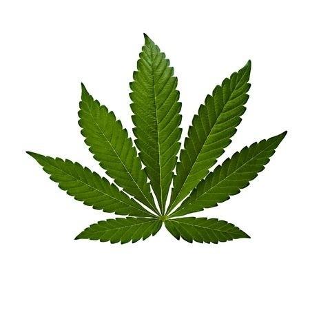 Understanding the Strains of Medical Marijuana