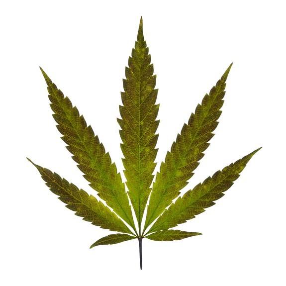Marijuana and Vaporizer Study 2016